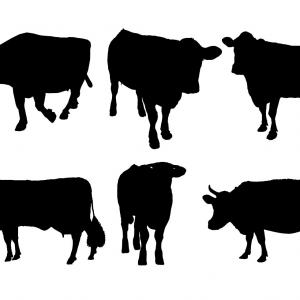 300x300 Catchy Silhouette Of Cow Vector Clipart Lazttweet