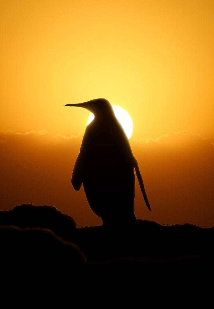 736x1062 389 Best Silhouettes Images On Silhouettes, Scenery
