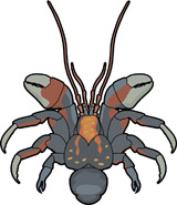160x185 Search Results For Crab