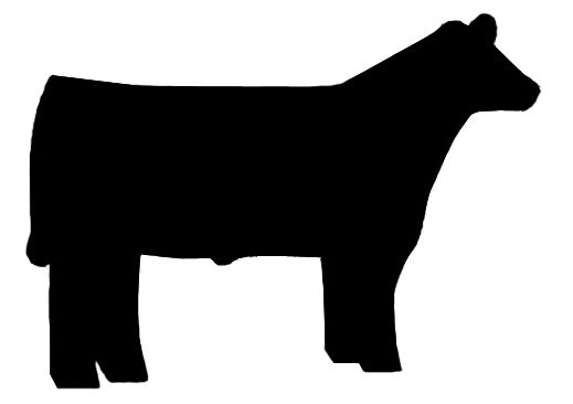 519x366 Pin By Nicole Hill On Country Life Cattle, Cricut