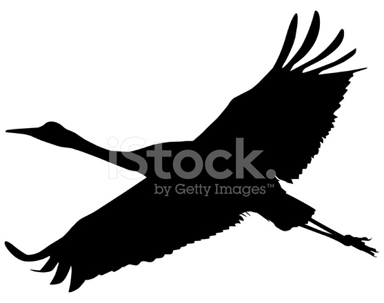 557x440 Sandhilll Crane Soaring Silhouette Stock Vector