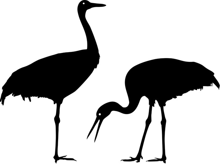 700x522 Silhouette Of Common Crane Wall Mural We Live To Change