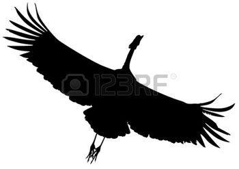 350x247 Crane Bird Silhouette Black Of Flying Crane Bird. Cranes