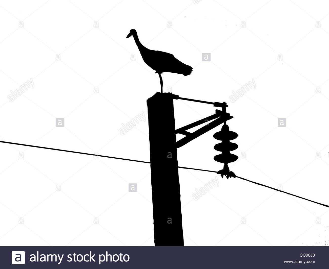 1300x1065 Crane Bird Black And White Stock Photos Amp Images