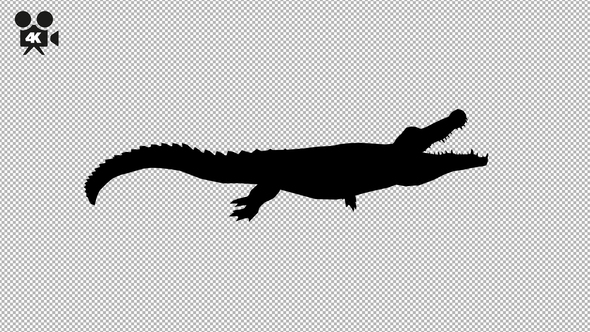 590x332 4k Crocodile Attack Silhouette By Handrox G Videohive