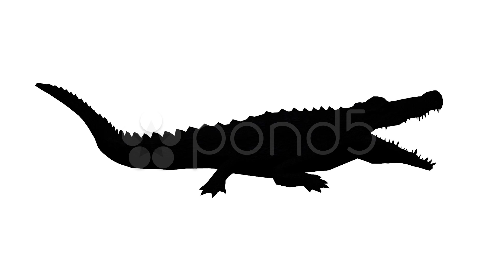 1920x1080 Crocodile Open Mouth Attack Hunting Eating,dangerous Animals