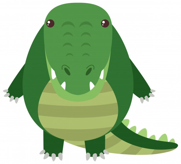 626x565 Crocodile Vectors, Photos And Psd Files Free Download