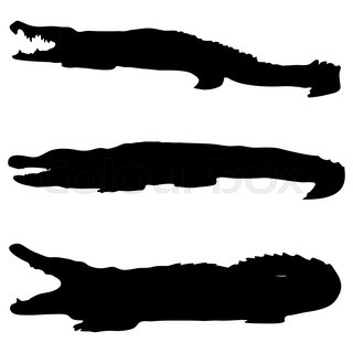 320x320 Set Of Crocodile Silhouettes On White, Vector Object Stock