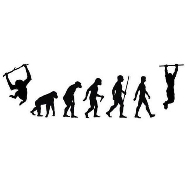 640x640 The Evolutionary Process Of A Bar Athlete.