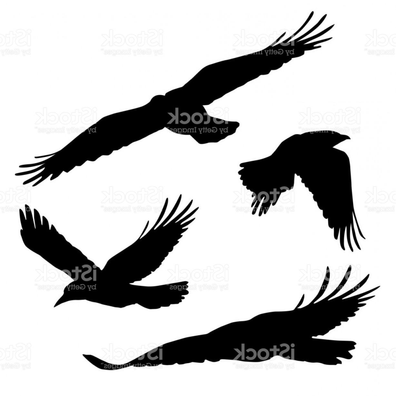 1228x1228 Flying Raven Vector Lazttweet