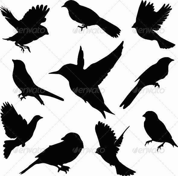 590x582 Vector Bird Set Flying Bird Silhouette, Silhouettes And Bird