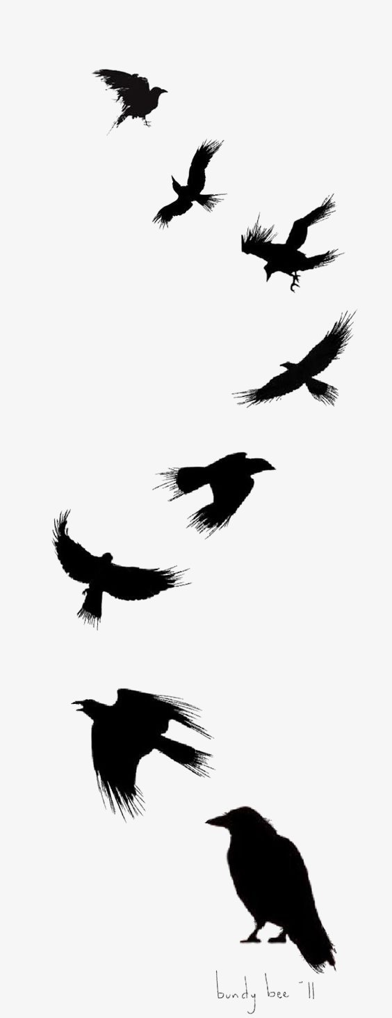 564x1462 Ink Crow, Silhouette Crow, Animal, Birds Png Image And Clipart