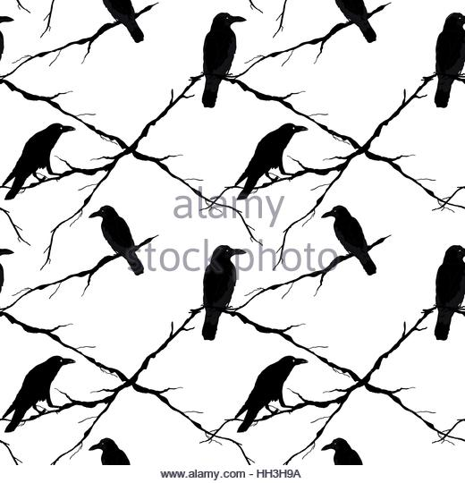 520x540 Crow In Flight Cut Out Stock Images Amp Pictures