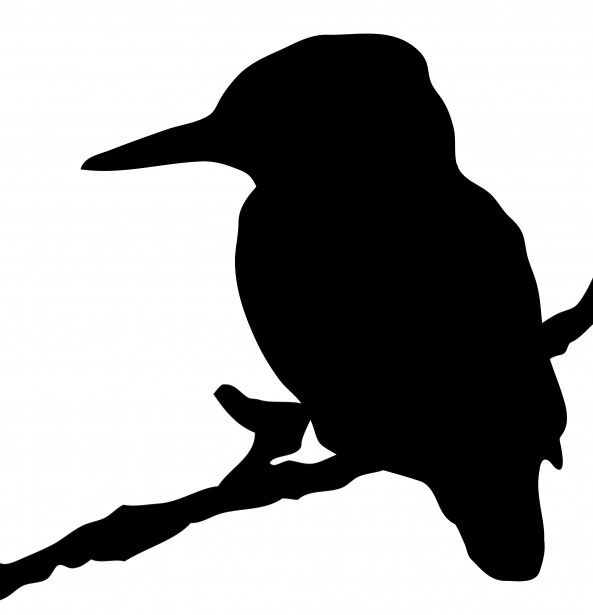 593x615 Kingfisher Bird Silhouette Clipart