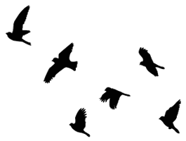265x200 Flying Birds Wall Decals Wall Decals, Bird And Tattoo
