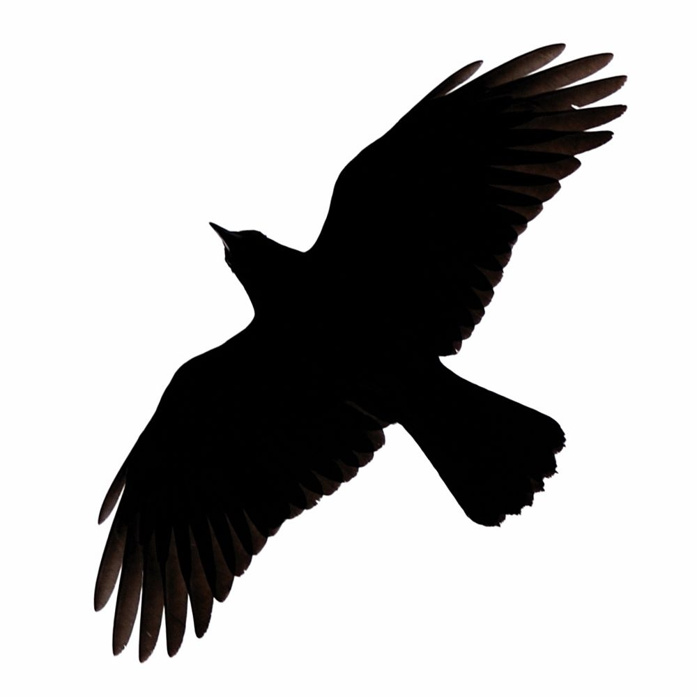 1000x1000 Raven Flying Clipart