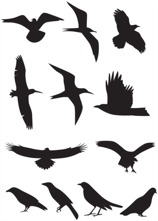 520x727 Best Photos Of Flying Bird Silhouette Template