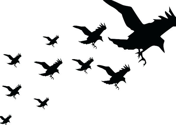 596x425 Bird Silhouette Free Vector Download Free Vector For Bird