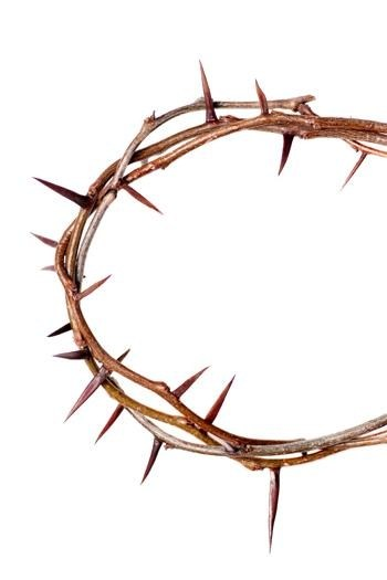 350x525 Crown Of Thorns Pictures Free Allofpicts