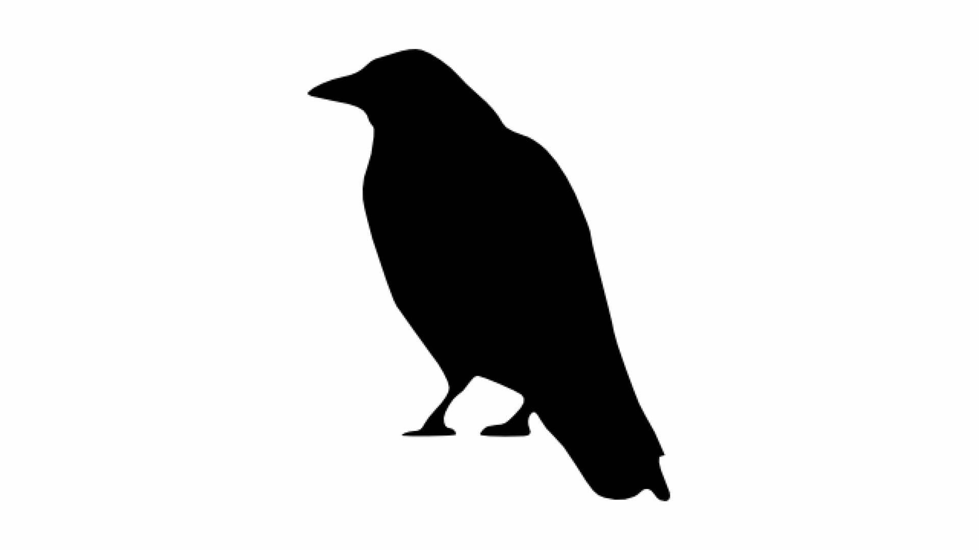 1920x1080 Crow Cawing Sound Effect