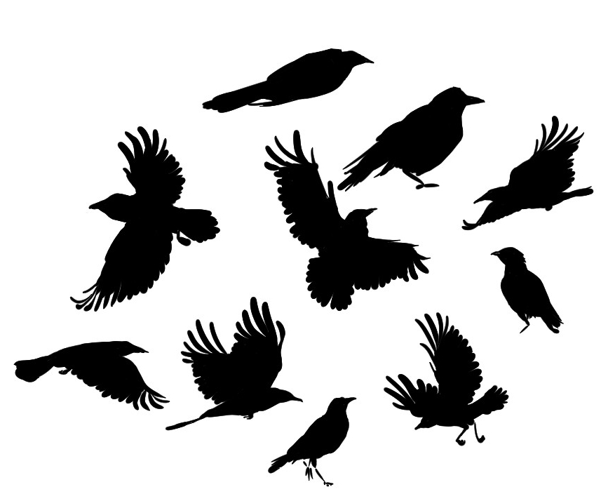867x704 Crow Practice By Mudlobster