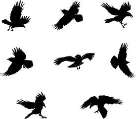 275x240 Search Photos Crows