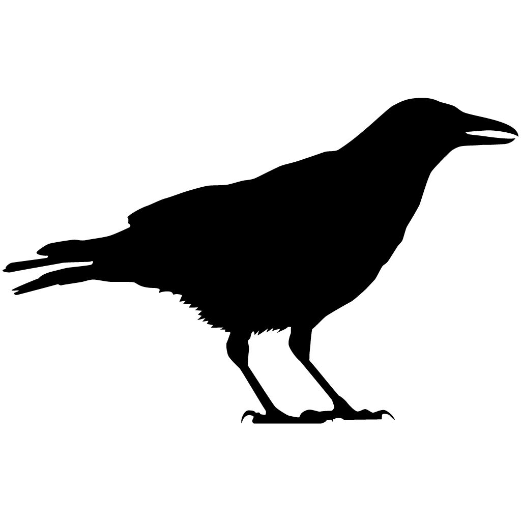 1024x1024 American Crow Overview, All About Birds, Cornell Lab Of Ornithology