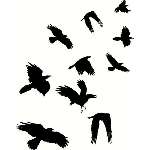 500x500 Crows Flying
