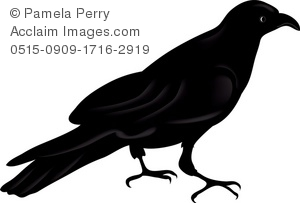 300x203 Black Crow Silhouette Royalty Free Clip Art Picture