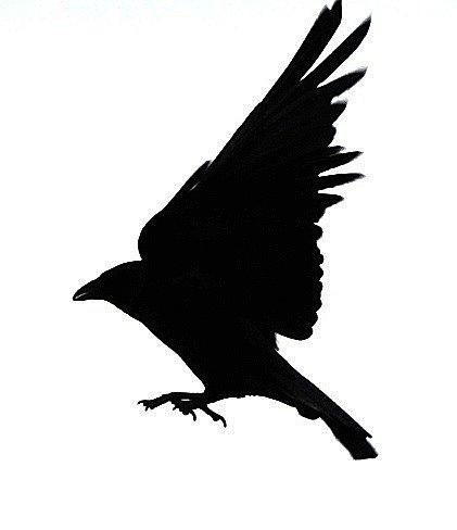421x488 Blackbird Clipart Black Crow