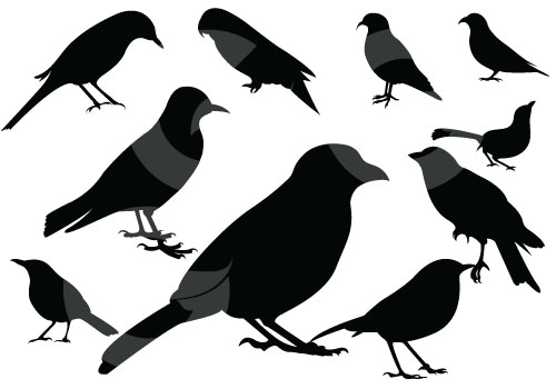 500x350 Cute Bird Silhouette Vector Graphics