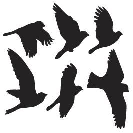265x265 I Have A Tattoo Of Silhouette Birds On My Backupper Armshoulder