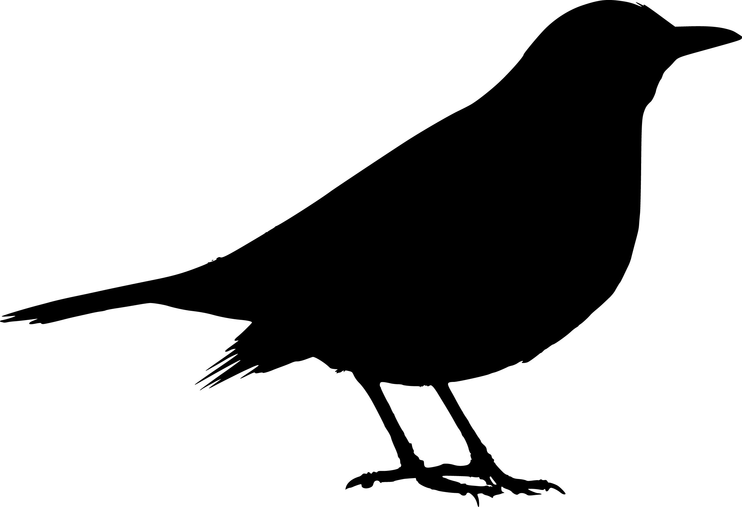 2567x1755 Black Bird Silhouette