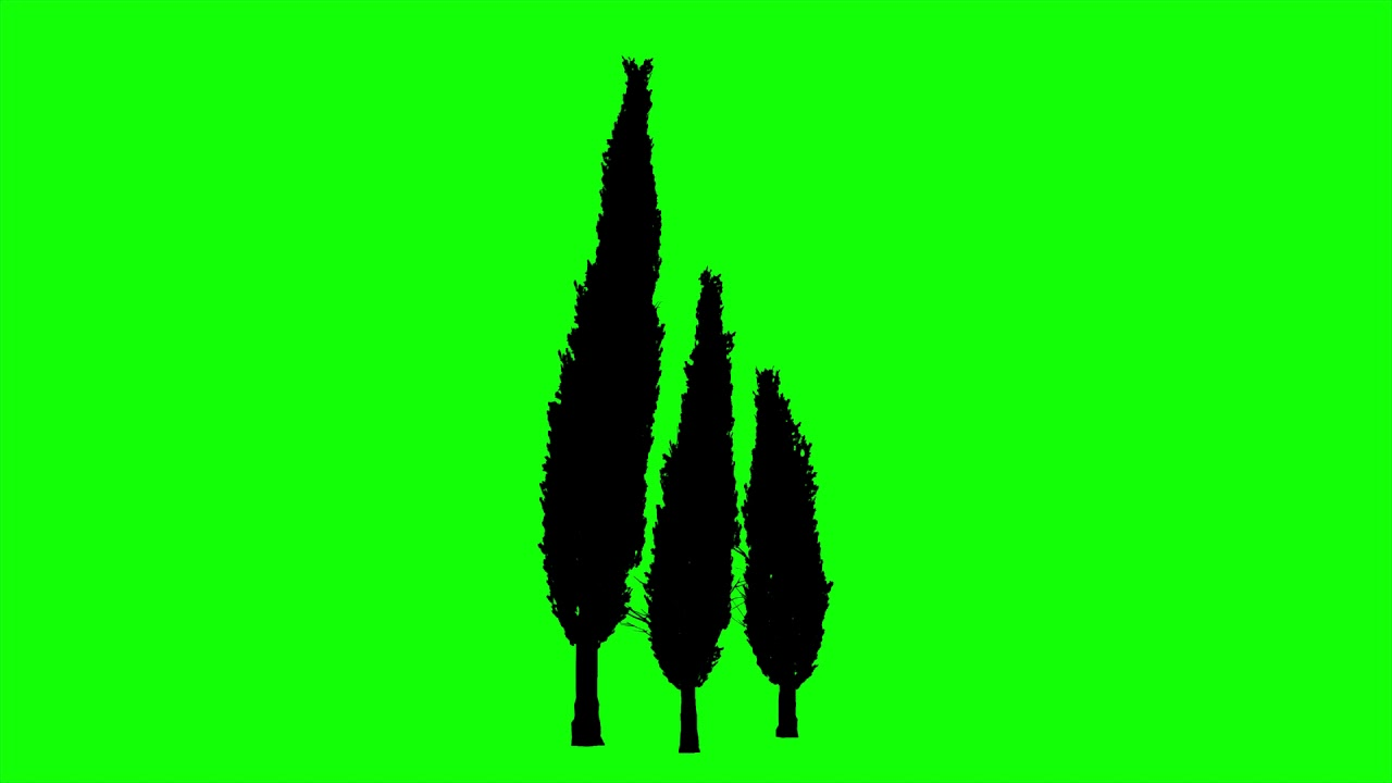1280x720 Free Hd Video Backgrounds Animated Italian Cypress Trees