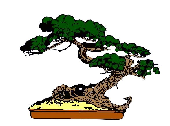 587x435 Bonsai Clipart Cypress Tree
