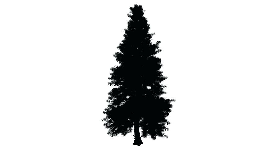 852x480 Cypress Tree Silhouette Bald Cypress Tree Silhouette Petts.club