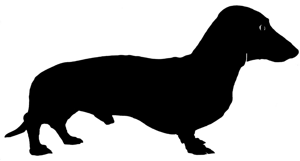 1024x549 Miniature Dachshund Silhouette A Silhouette Of My Dog