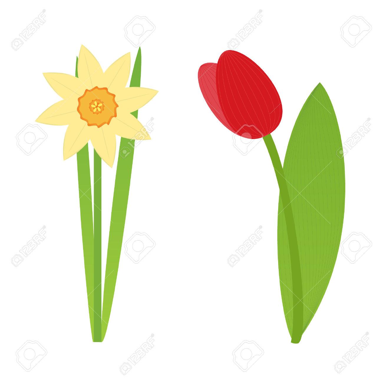 1300x1300 Tulip Clipart Daffodil Flower