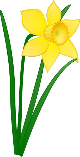 306x596 Daffodil Clip Art Free Vector In Open Office Drawing Svg ( Svg