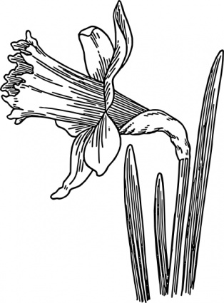 314x425 Daffodil Clip Art Vector, Free Vector Graphics