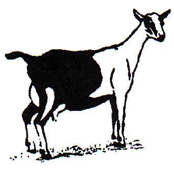 342x336 Alpine Goat Clipart