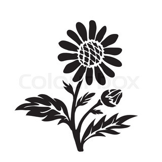 320x320 Daisy Flower Hand Drawn Outline Doodle Icon. Field Daisy Flower