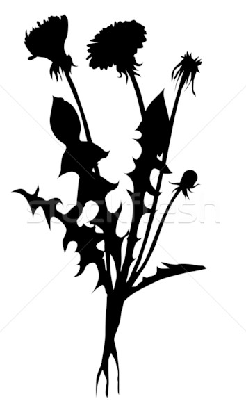 354x600 Vector Silhouette Dandelion On White Background Vector