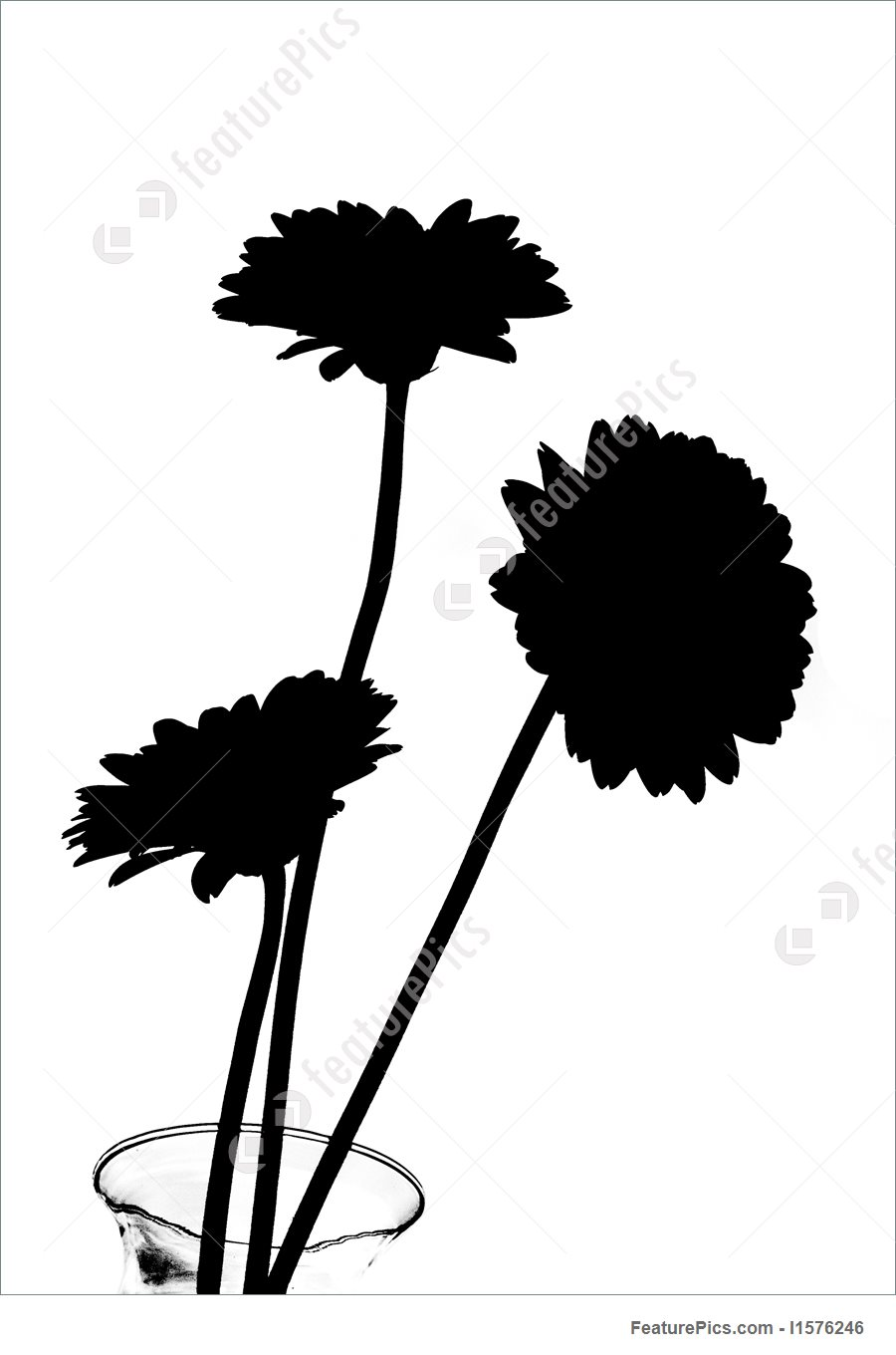900x1360 Daisies In Silhouette Illustration