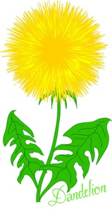 159x300 Dandelion Clipart Many Interesting Cliparts