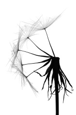 156x235 Dandelion Silhouettes On A Grunge Stock Vector
