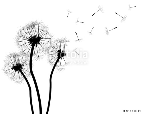 500x400 Dandelion Silhouette On White Stock Photo And Royalty Free Images