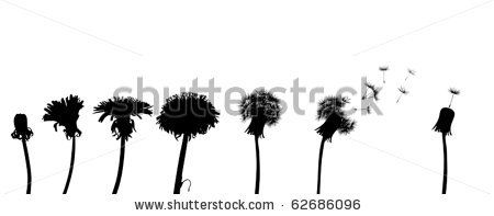 450x197 Dandelions Silhouettes Free Vector For Free Download About (12