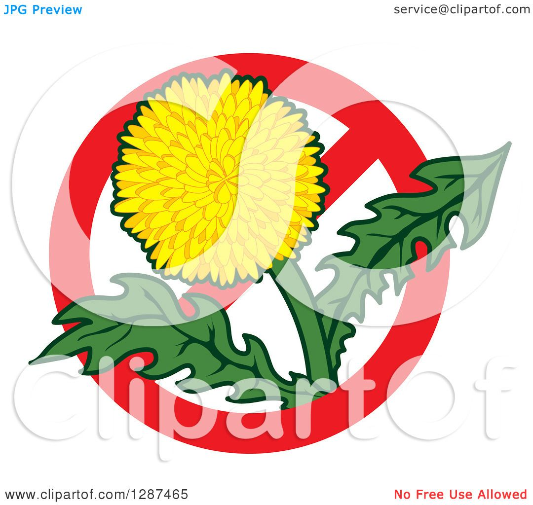 1080x1024 Clipart Of Lawn Care Design Of Dandelion Weed Flower In