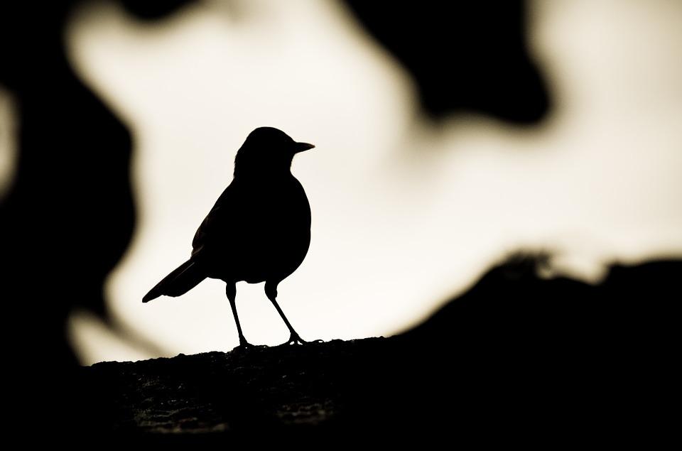 960x635 Free Photo Birds Dusk Fauna Evening Black Silhouette Dark